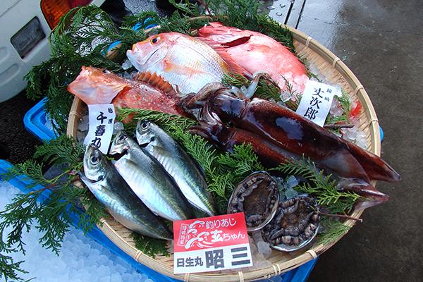 玄界灘の旬の鮮魚セット5000